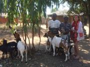 Margaret (Zikomo) with village chiefs and their goats.
